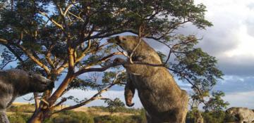 Une représentation en 3D d'un paresseux géant, tel qu'il pouvait être il y a 12 000 ans de ça sur le plateau des Guyanes, à la fin de l'ére glaciaire (illustration livrée par le Parc amazonien de Guyane)
